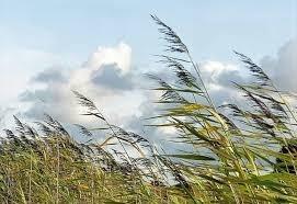 Rosa Fonti ci descrive in versi con il vento la bellezza della Natura